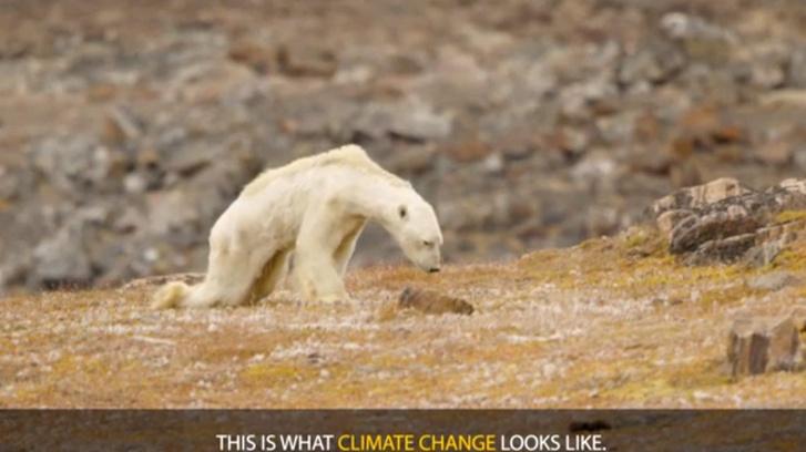 jegesmedve klimavaltozas-1140x640