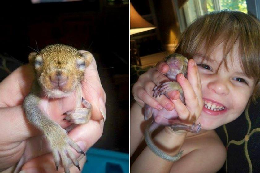 A sérült kicsi mókuskölyköt az egész család szeretettel fogadta. Bellának keresztelték.
