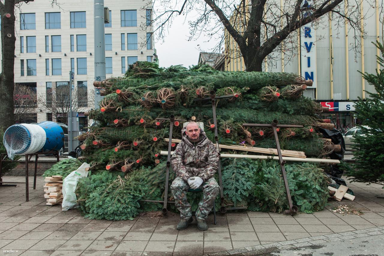 Karácsonyfaárus a Blaha Lujza téren.