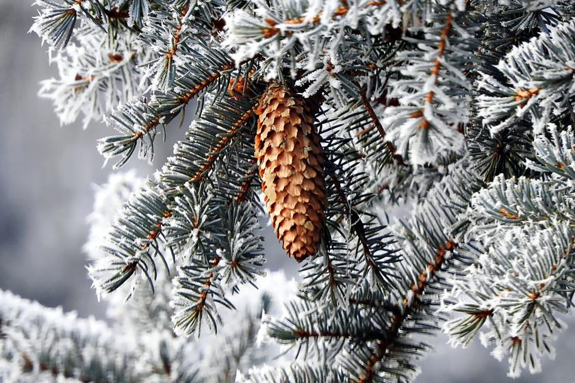 A legszebb téli fenyőerdők Magyarországon: mesébe illő a látvány