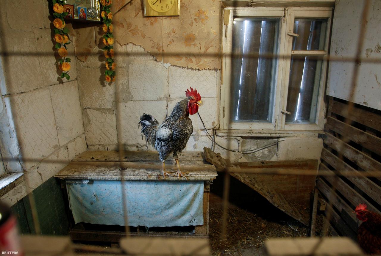 Baromfiudvarrá tett egykori szoba egy házban az Október kerületben.