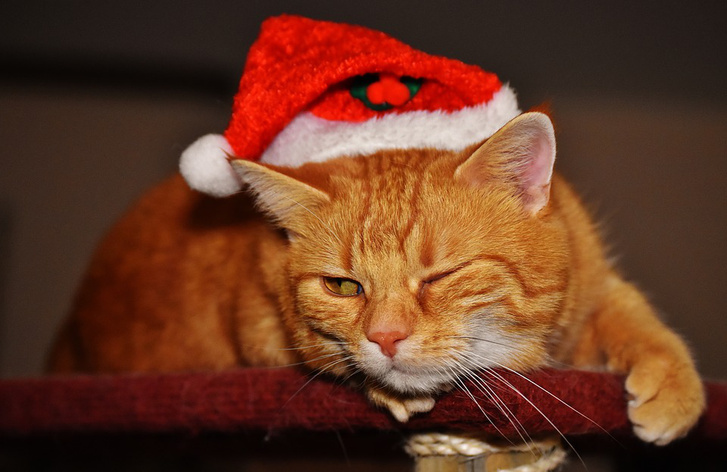 Cat-Santa-Hat-Christmas-Cute-Funny-Wink-Red-1898491
