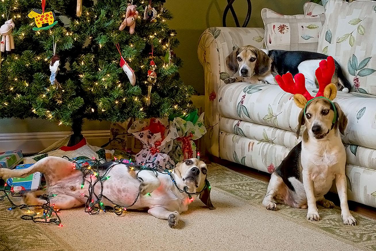 karacsony-kutyak