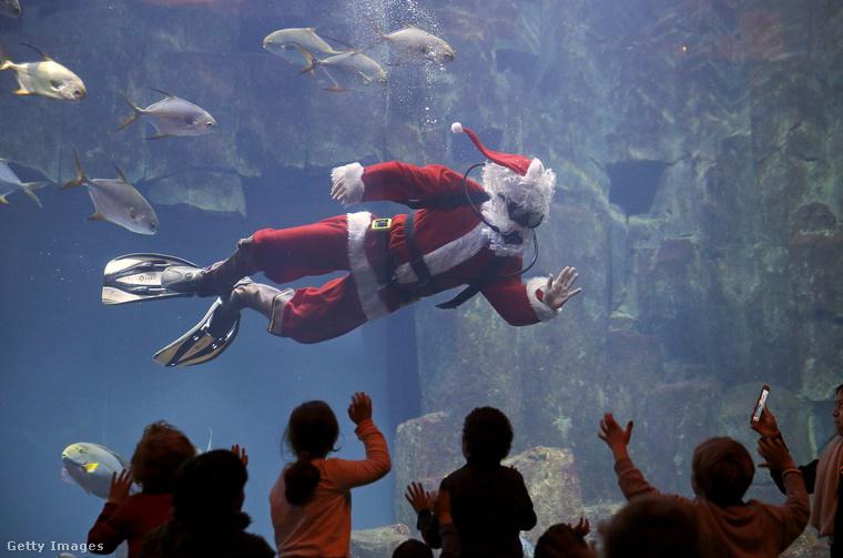 Ezek a képek pénteken készültek az L'Aquarium de Paris nevű helyen