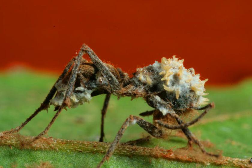 az ételt nem szerető paraziták férgek féreghajtó
