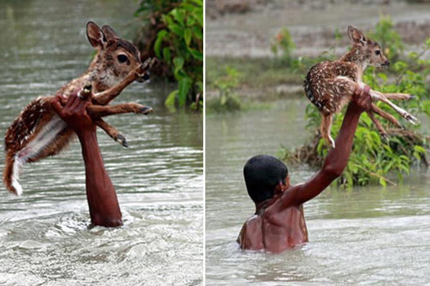 Ez a bangladesh-i fiú, Belal megmentett egy őzgidát a fulladástól.Hasibul Wahab természetfotós szerencsére épp jelen volt, és lefényképezte.