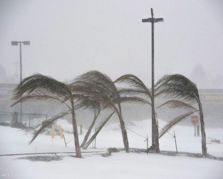 Hóvihar tépázza a pálmafákat a Delaware állambeli Rehoboth tengerpartján 2018. január 4-én.