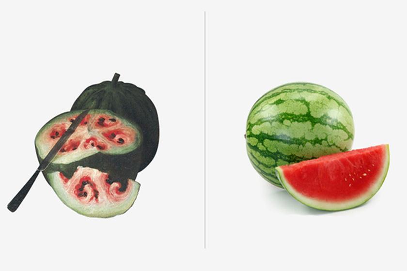 A görögdinnyének szívre emlékeztető, kis csigákban végződő magházai voltak. A héja vastagabb volt, a színe kevésbé élénk. Az ember lédús, élénk ízű és színű gyümölccsé termesztette, elszórt magvakkal vagy nélkülük.