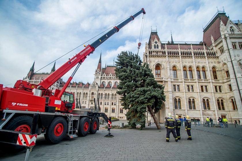 Az utolsó pillanatok: a tűzoltók daru segítségével mozdították el a fát a helyéről.