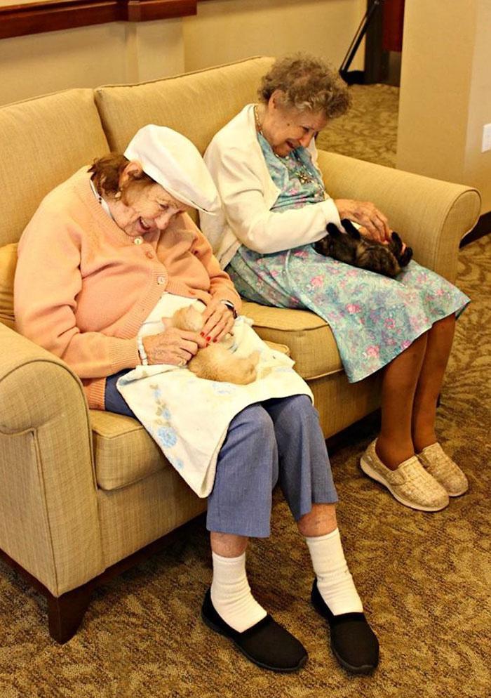 A kezdeményezést elindító Rebecca Hamilton elmondta, hogy az állatok az Alzheimer-kórral küzdő idősekre is pozitív hatást gyakorolnak, ugyanúgy, ahogy a demencia tüneteit is képesek enyhíteni.