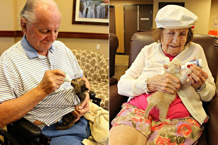 Árva kiscicákat adtak a nyugdíjas otthon lakóinak - Szívmelengető fotókon a találkozás