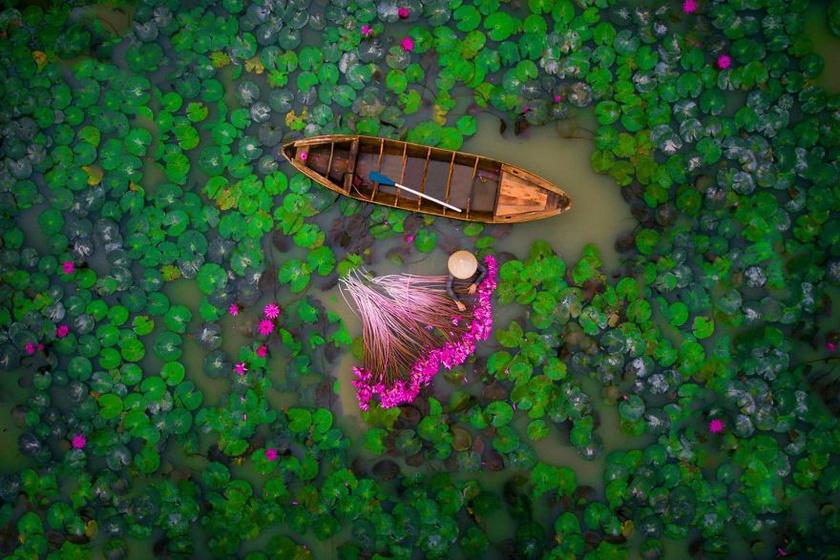 Ez a felvétel Vietnamban készült: egy asszony a vízililiomokat szedegeti egy tóban. A színvilág valami káprázatos lett.