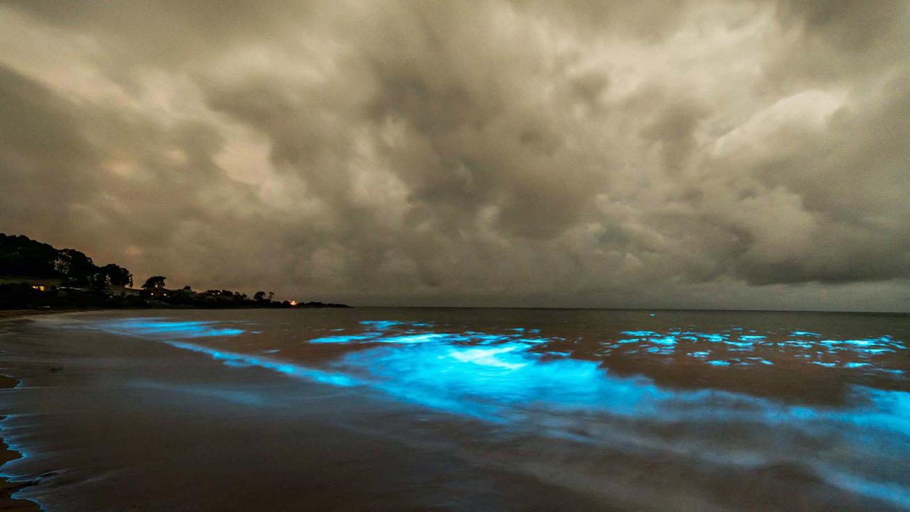 biolumineszcencia-tasmania-cover