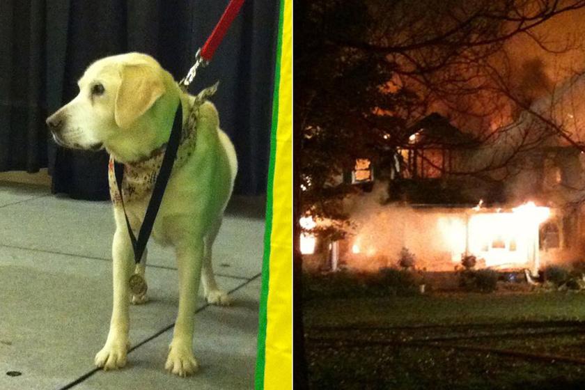 Hősként tisztelik a vak kutyát, aki 7 ember, 2 kutya és 4 macska életét mentette meg