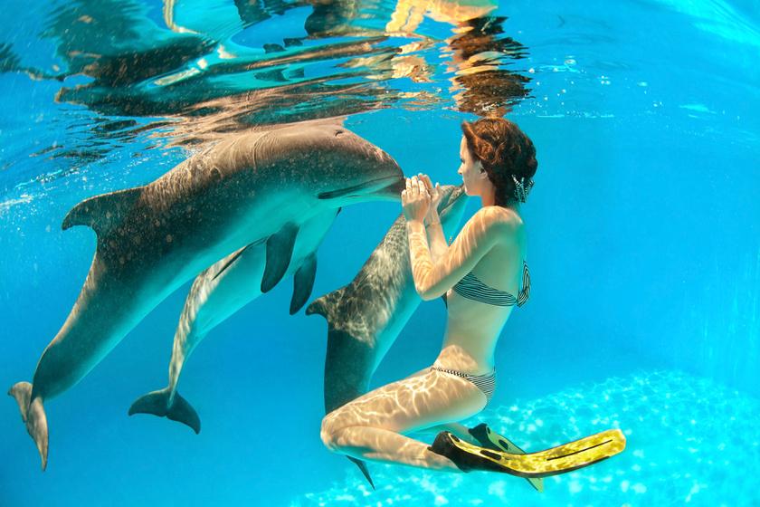 Megtanulhatna az ember delfinül? Közel 30 éves kutatását összegzi a kutató