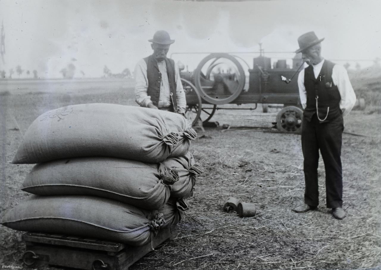 Bezsákolt termény mázsálása, a háttérben egy gőzhajtású mezőgazdasági stabilmotor (1923).