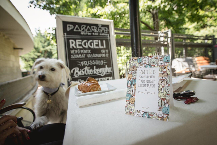Jöjjön egy kis cukiság: a jelöltek közt találtunk egy olyat is, hogy kutyaétlap