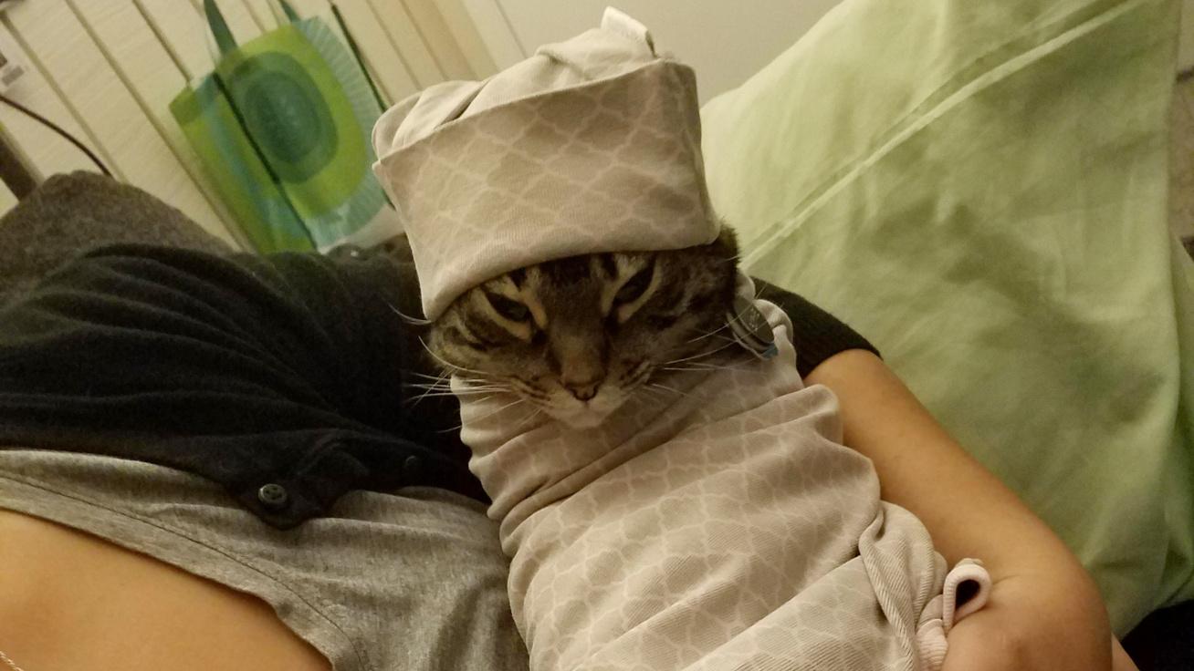 bepolyazott-macska-cover