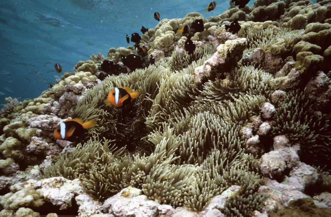 Földünk egyik leggazdagabb és legváltozatosabb tengeri élőhelye