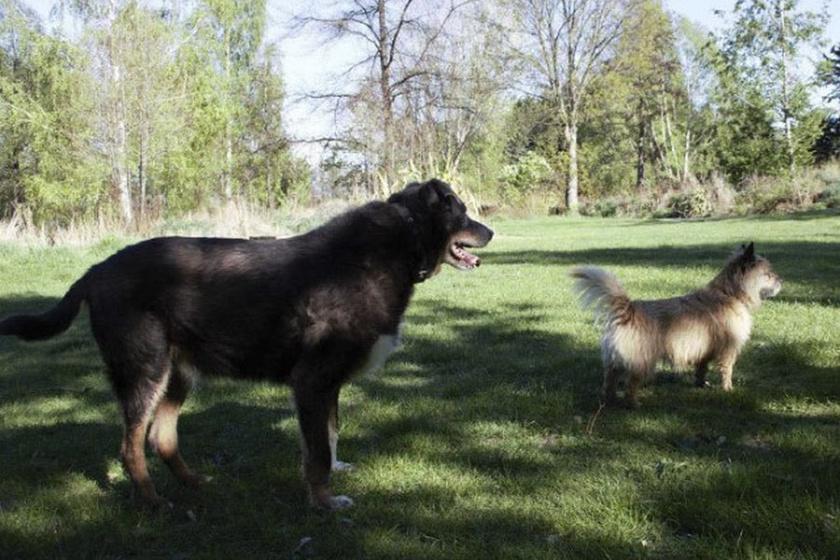Louie és Maddy