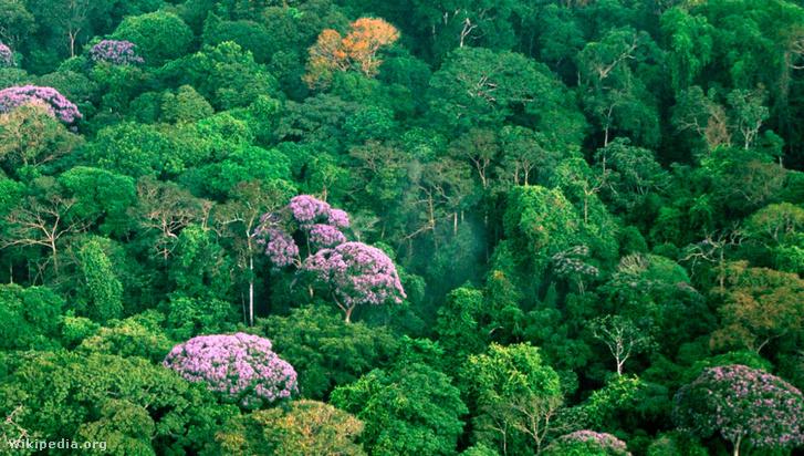 Esőerdő a Barro Colorado-szigeten