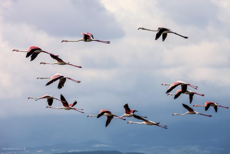 A Larnaka melletti sós tónál télen rózsaszínű flamingók vernek tanyát, ezt a látványt semmiképp ne hagyd ki ha elutazol ide!