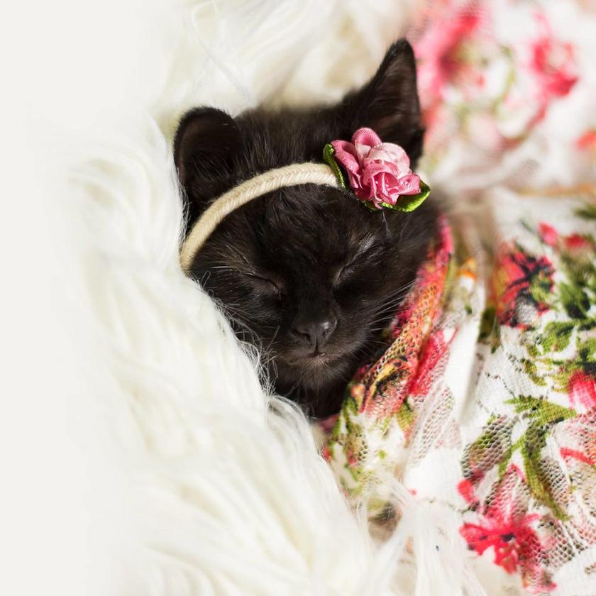 Luna cica napi húsz órát alszik, ezért a fotósnak nem volt túl nehéz dolga.