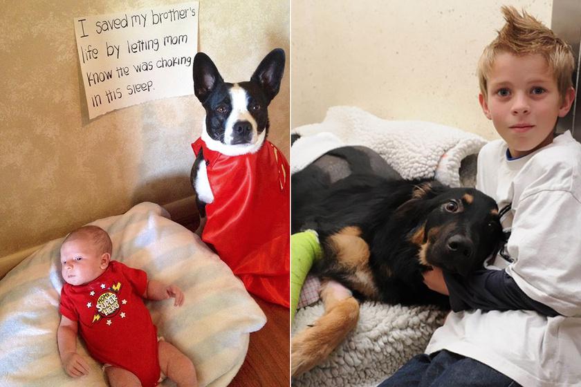 A kutya mentette meg a fuldokló kisbaba életét - 10 négylábú, aki igazi hőstettet hajtott végre