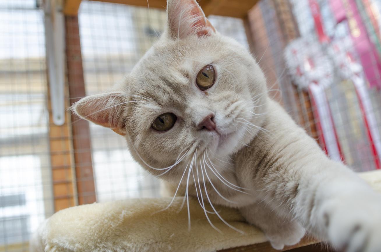 cica-macska