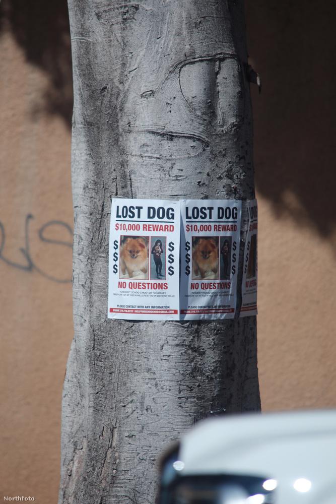 A kutya még vasárnap tűnt el, de azóta sem került elő, ezért szállt be Paris Hilton a keresésbe.