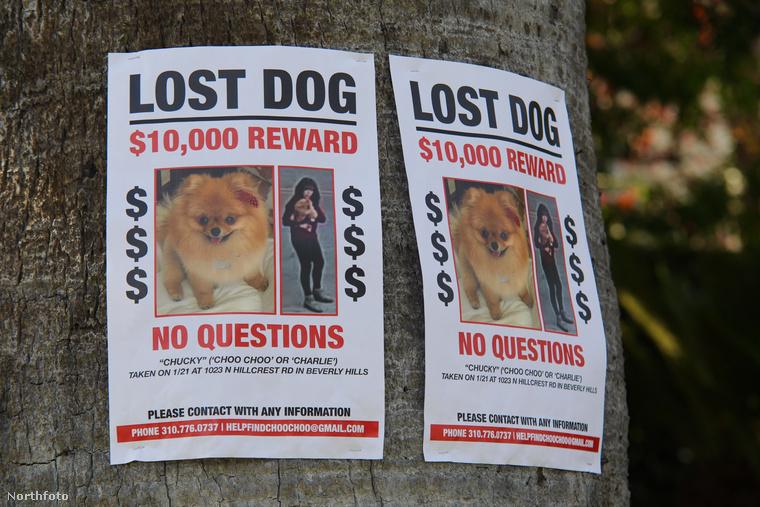 A hirdetés pirossal kiemeli, hogysemmi kérdéstnem fognak feltenni a, khm, becsületes megtalálónak, akiről ezek szerint a kutya tulajdonosai azt sejtik, hogy lehet, hogy nem is olyan becsületes és nem is megtaláló