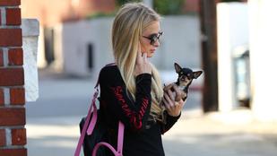 Paris Hilton 2,5 milliót ajánl a kutyamegtalálónak