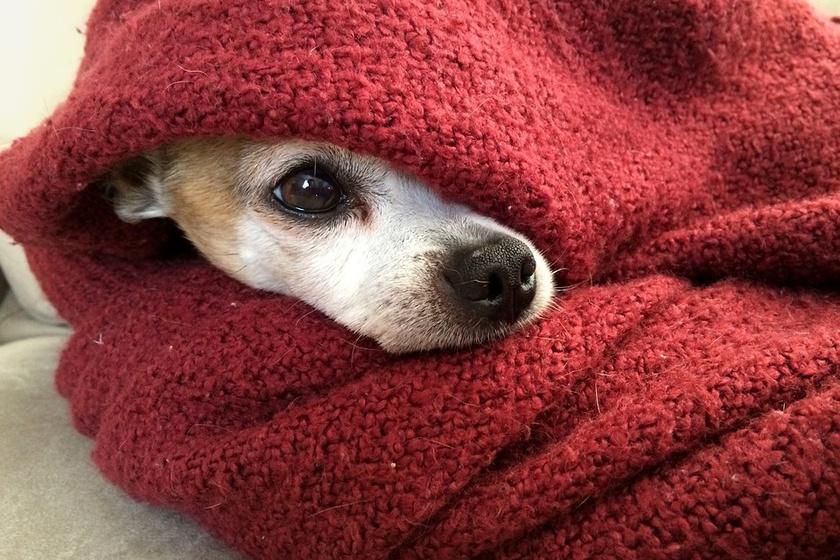 kutya-takaro
