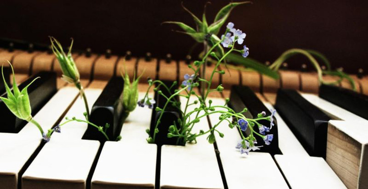 28047-f9d42d-music-and-plants-5