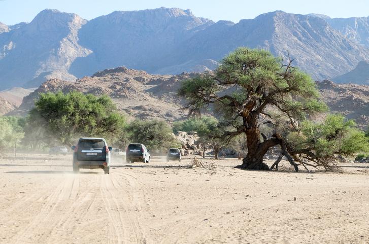 Néhol vannak fák is, egész fura formákban