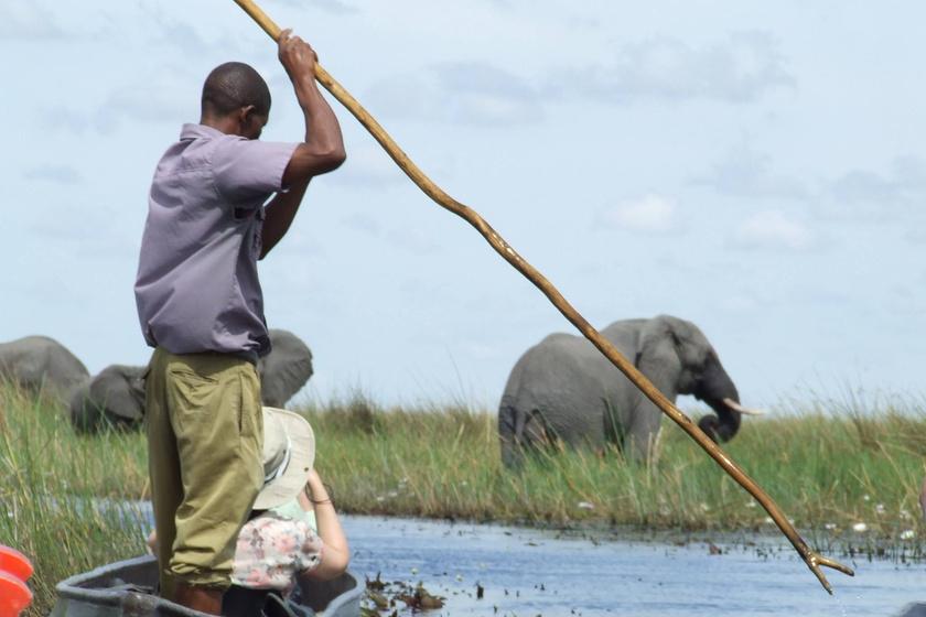 Különleges élmény volt számára ennyire közel kerülni az elefántokhoz, de egyben rendkívül veszélyes is. Juditék alaposan megilletődtek, amikor látták, a helyiek is igen komolyan veszik ezt a helyzetet.