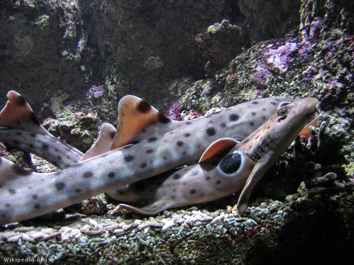 Océanopolis - les aquariums 009
