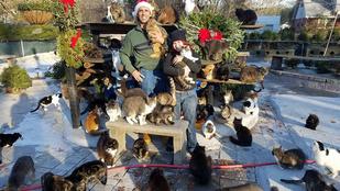 Meghalt a fia, azóta 300 macskával él együtt