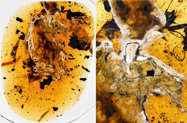 A burmai borostyánban talált madárfosszília két oldala