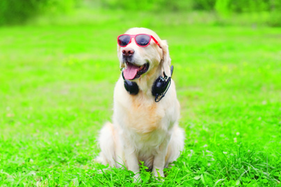 kutya zenet hallgat1