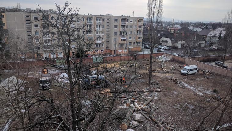 Kivágták a fákat az egykori Újpesti Szülőotthon kertjében