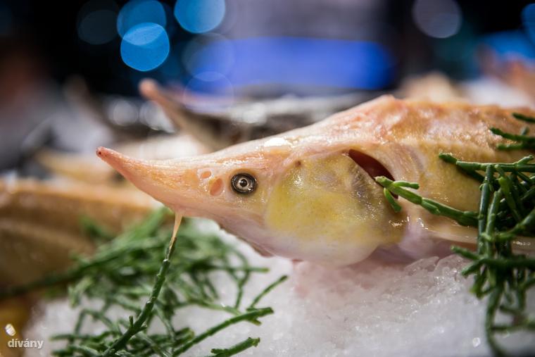 Persze nem csak zöldségekből volt hatalmas a kínálat: a halpulton többek között kecsegék mosolyogtak.