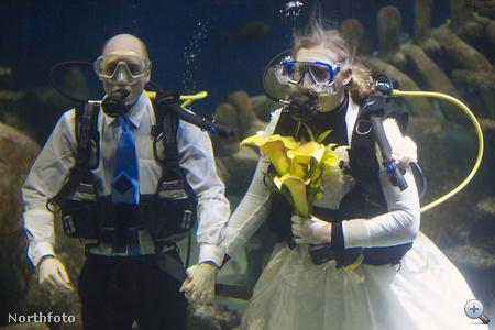 Kathryn O'Connor és James Oliver, a londoni Sea Life Aquarium dolgozói víz alatt házasodnak össze