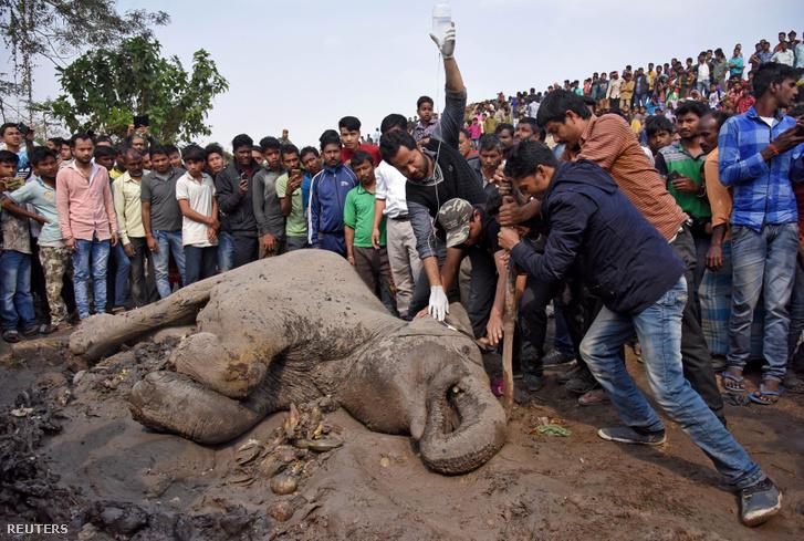 Helyiek próbálnak segíteni az egyik sérült elefánton