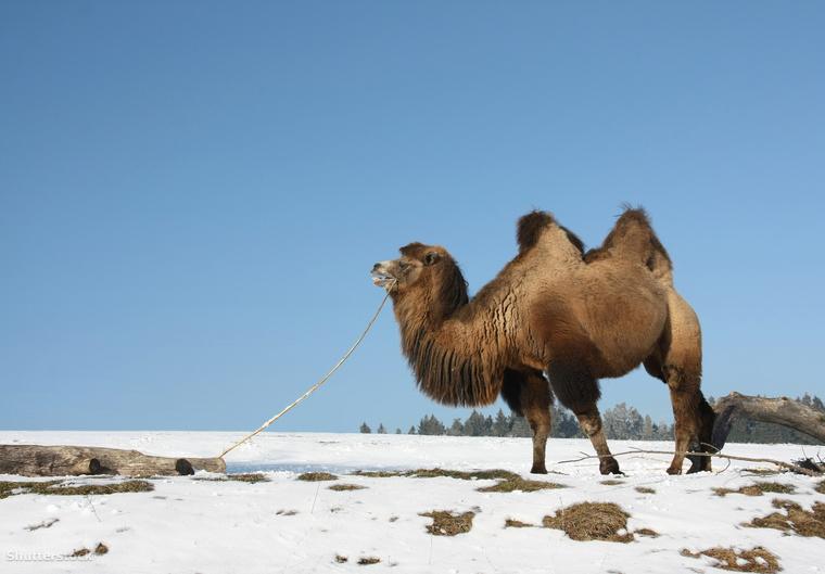 A sivatagokban is lehet hideg a tél