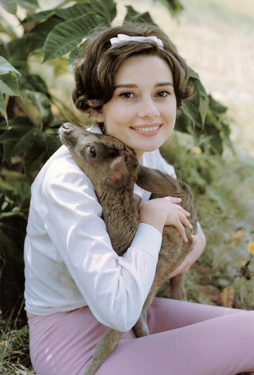 Audrey Hepburn imádta az őzét, a lakásában külön fürdőkádban aludt, de volt, hogy bevásárolni is elvitte magával.
