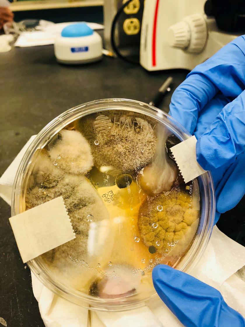 bakteriumok-kezszaritoban