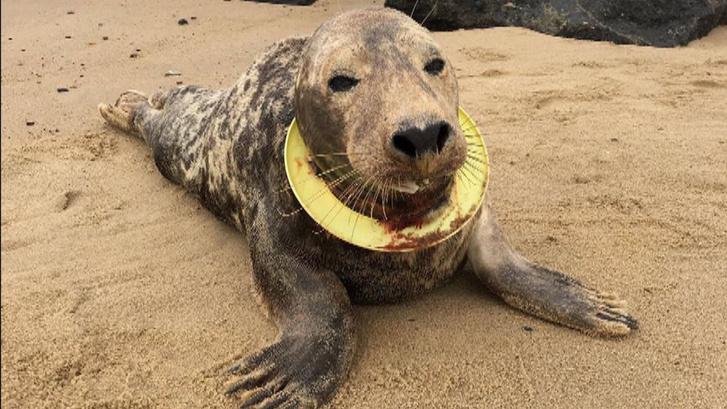 skynews-frisbee-norfolk-seal 4236510