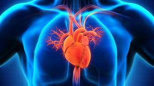 Kvíz: 10 kérdés az emberi szívről