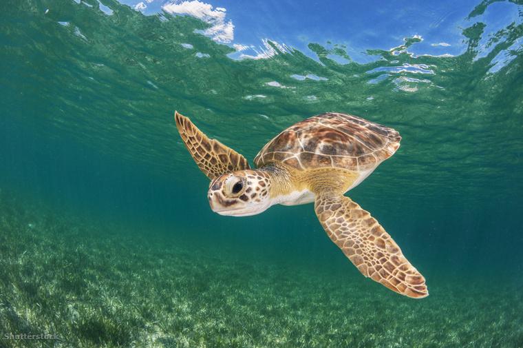 A Bahamákon is megtaláltam a kedvenc állatomatfajomat: a teknőst